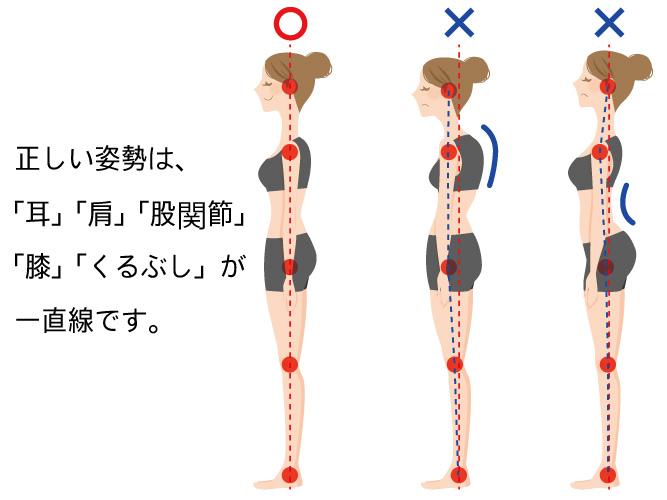 正しい姿勢とは「耳」「肩」「股関節」 「膝」「くるぶし」が 一直線です。